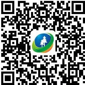 广西林业子在线
